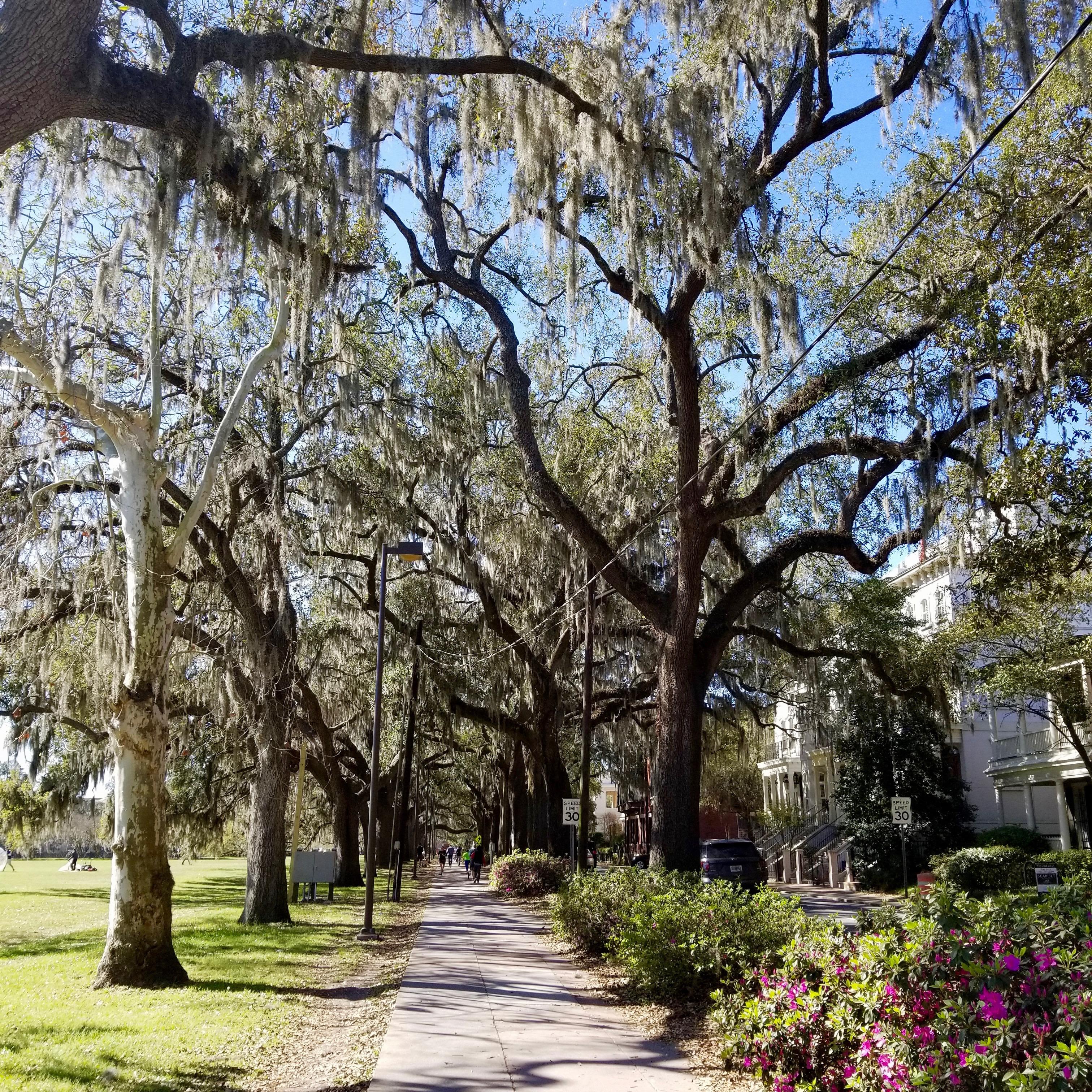 trees in forsyth park savannah