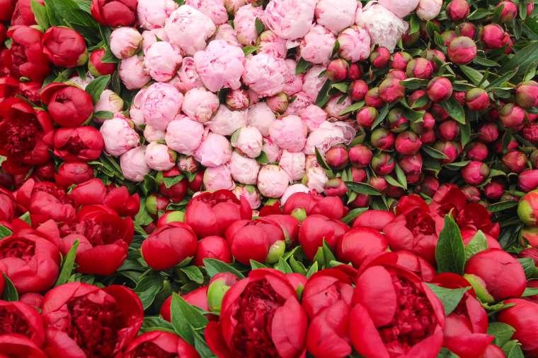 Columbia Road Flower Market Scenery London
