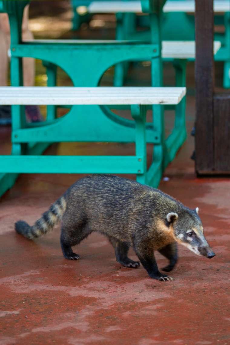 Wildlife Inside Iguazu National Park Argentina 2