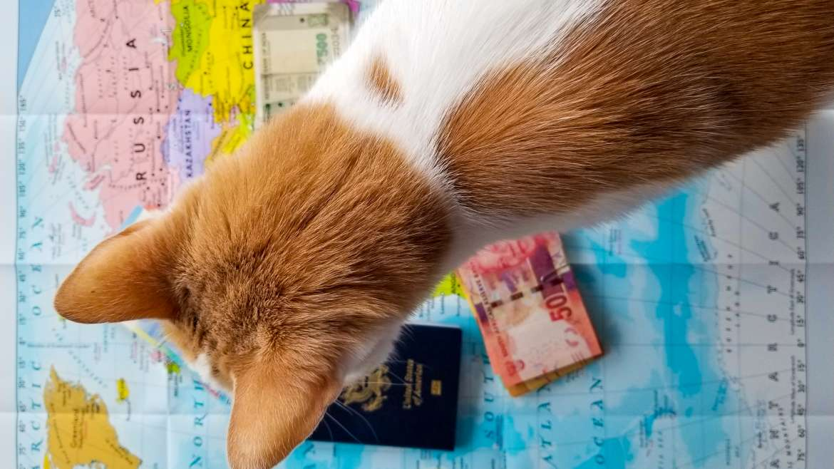White and Black Cats Moving to Germany