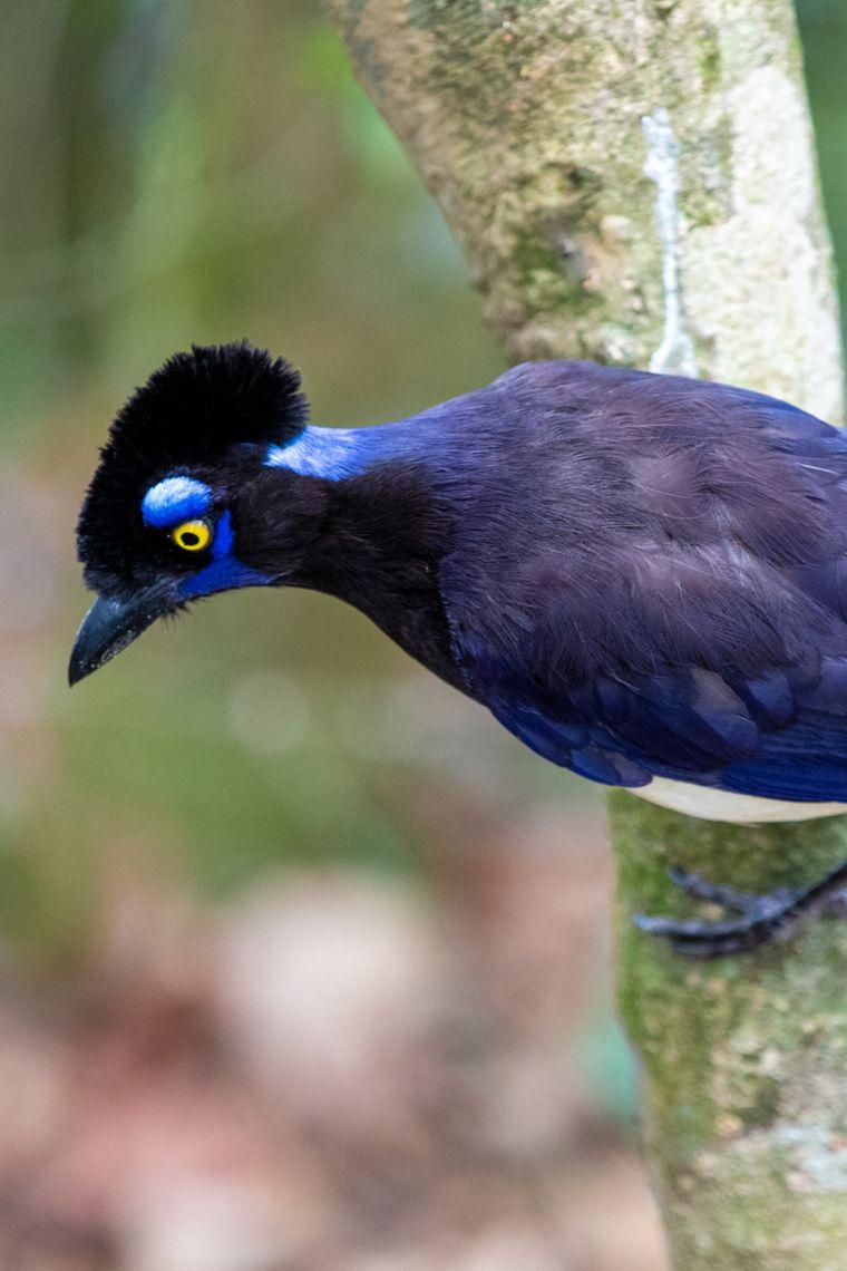 Wildlife Inside Iguazu National Park Argentina and Brazil