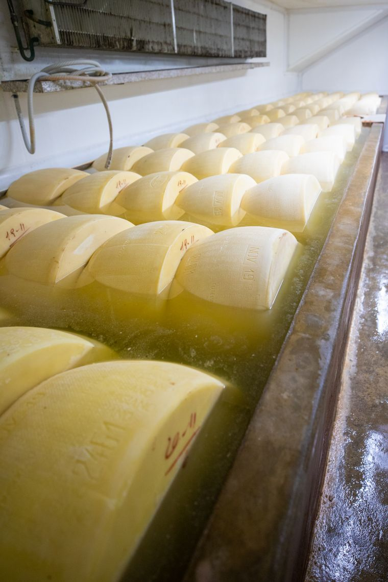 Parmesan Cheese Making Process Parma Italy